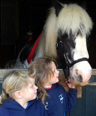 Extracurricular-horses