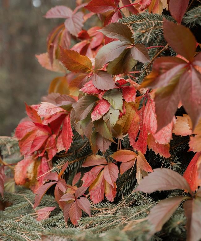 Autumn-panel